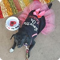 Adopt A Pet :: Teeny - Las Vegas, NV