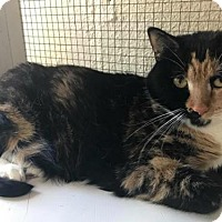Adopt A Pet :: Confetti 2014 - Hampton, VA