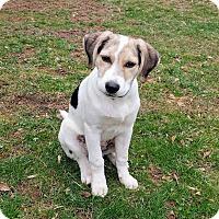 Adopt A Pet :: Chrissy - New Oxford, PA