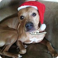 Adopt A Pet :: Trina - Northumberland, ON
