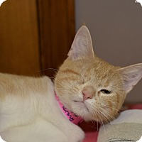 Adopt A Pet :: Winkie - Medina, OH