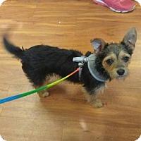 Adopt A Pet :: Josie - Leduc, AB