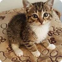Adopt A Pet :: Merlot - Duluth, GA