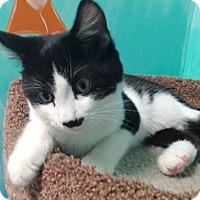 Adopt A Pet :: Howie - Newport Beach, CA