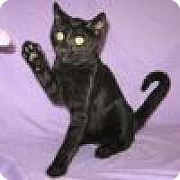 Adopt A Pet :: Boris - Powell, OH