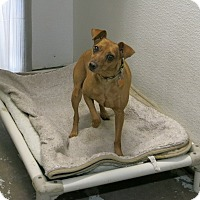 Adopt A Pet :: Spike - Geneseo, IL
