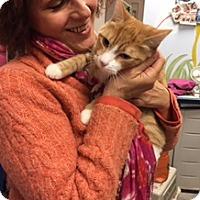Adopt A Pet :: Gizmo - Manchester, CT