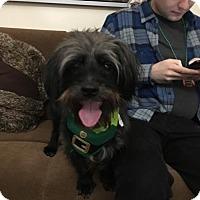 Adopt A Pet :: Hershey - Brooklyn, NY