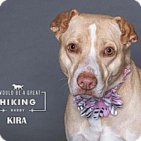 Adopt A Pet :: Kira - Boise, ID