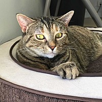 Adopt A Pet :: POLLY - Woodstock, GA