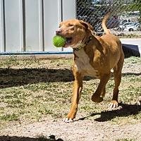 Adopt A Pet :: Jaco - Bisbee, AZ
