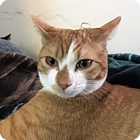 Adopt A Pet :: Jordan - Vancouver, BC