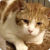 Adopt A Pet :: Bunjee - Queens, NY
