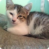 Adopt A Pet :: Smudge - Bensalem, PA