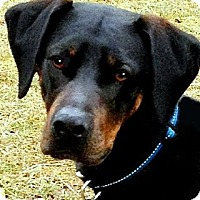Adopt A Pet :: JUDE(TRAINED--SO SMART!! WOW! - Wakefield, RI