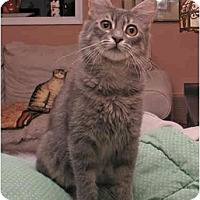 Adopt A Pet :: Harvey - Arlington, VA