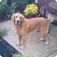 Adopt A Pet :: Lucky - Bedminster, NJ