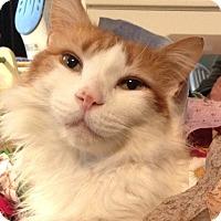 Adopt A Pet :: Shaggers - Trevose, PA