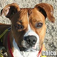 Adopt A Pet :: Chico - Encino, CA