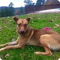 Adopt A Pet :: CHEETO - Glastonbury, CT