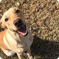 Adopt A Pet :: Sterling - Austin, TX