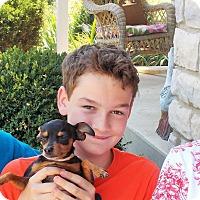 Adopt A Pet :: Pippa - Plain City, OH