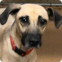 Adopt A Pet :: Georgia - Salt Lake City, UT