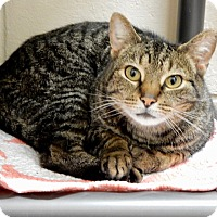 Adopt A Pet :: Ren - Long Beach, NY