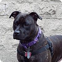 Adopt A Pet :: Jasmine - Perry, NY