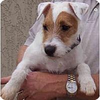 Adopt A Pet :: BAM - Phoenix, AZ