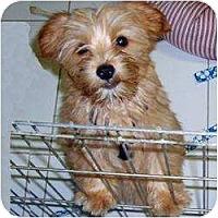 Adopt A Pet :: Charlie Boy - Homestead, FL