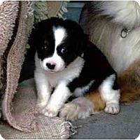 Adopt A Pet :: Sofie - Orlando, FL