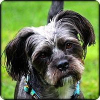 Adopt A Pet :: RUFUS - ADOPTION PENDING - Little Rock, AR