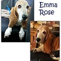 Adopt A Pet :: EmmaRose - Marietta, GA