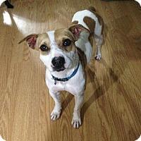 Adopt A Pet :: Reagan - Normandy, TN