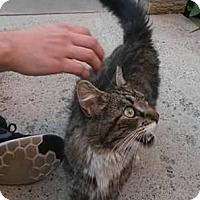 Adopt A Pet :: MAGNOLIA - Ridgewood, NY