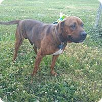 Adopt A Pet :: Todd - Bellingham, WA