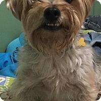 Adopt A Pet :: Mac - Los Angeles, CA