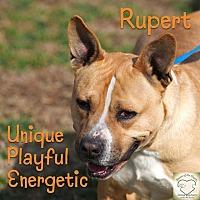 Adopt A Pet :: Rupert - Washburn, MO