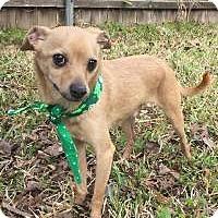 Adopt A Pet :: Stanley in Texarkana, TX - Texarkana, TX