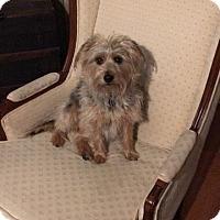 Adopt A Pet :: Daisy - Lorain, OH