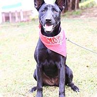 Adopt A Pet :: Samini - Castro Valley, CA