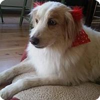 Adopt A Pet :: Cassie - Las Vegas, NV