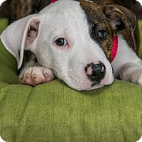 Adopt A Pet :: Baby Miney - Miami, FL