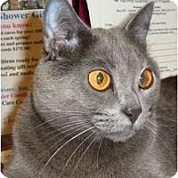 Adopt A Pet :: Vera - Carmel, NY