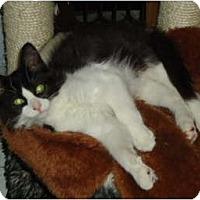 Adopt A Pet :: Fox - Elmira, ON