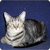 Adopt A Pet :: T Bone - Warren, OH