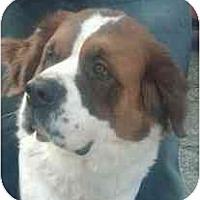 Adopt A Pet :: Phoebe - Seattle, WA