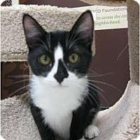 Adopt A Pet :: Pickles - Brea, CA