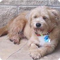 Adopt A Pet :: clementine - houston, TX